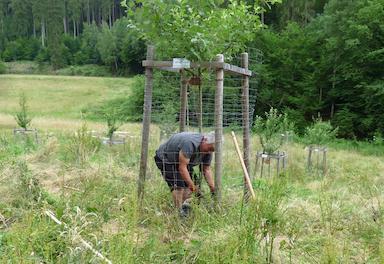 Foto_Alfons im Käfig der Baumscheibe